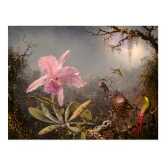 Cattleya Orchid and Three Hummingbirds Postcard