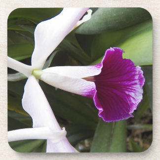 Cattleya Orchid Floral Drink Coaster