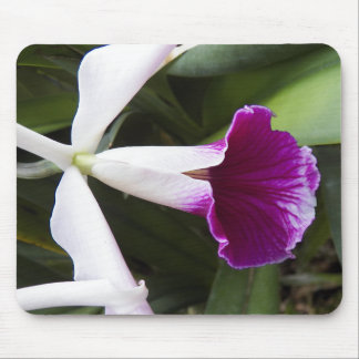 Cattleya Orchid Floral Mouse Pad