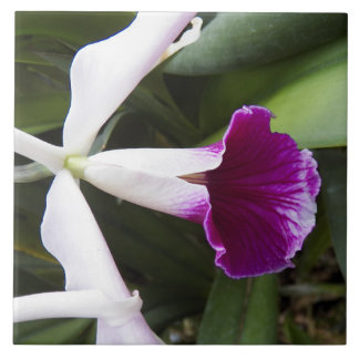 Cattleya Orchid Floral Tile