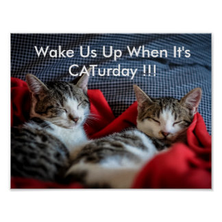 Caturday Poster