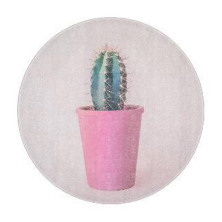 Catus in pink pot boards