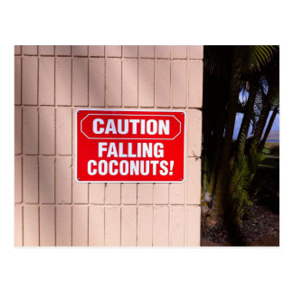Caution - Falling Coconuts! Postcard