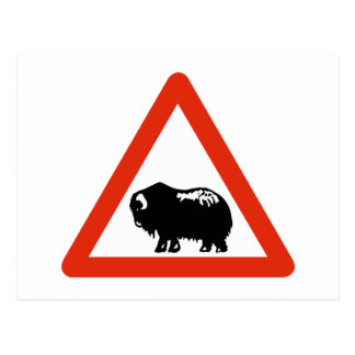 Caution Musk Oxen, Traffic Sign, Greenland Postcard