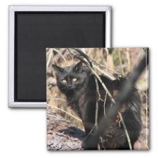 Cautious Star Noir Cat Magnet