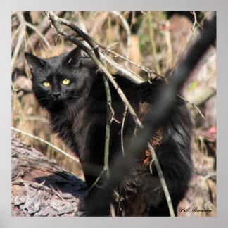 Cautious Star Noir Cat Poster