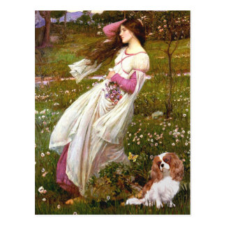 Cavalier 2 (Bl) - Windflowers Postcard