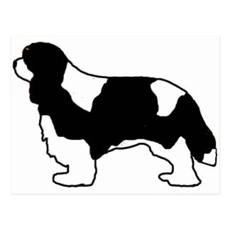 Cavalier King Charles black and white silo Postcard