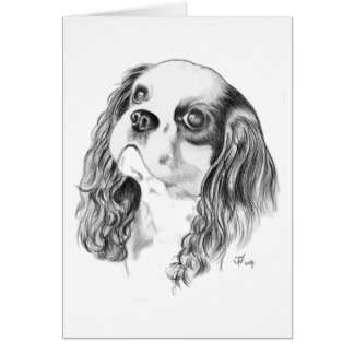 Cavalier King Charles Drawing Card