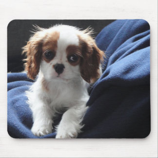 Cavalier King Charles puppy mousepad