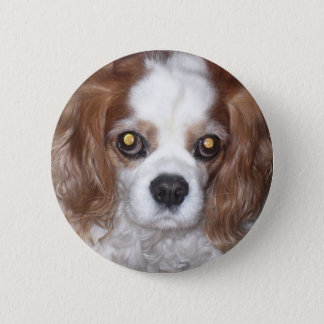 CAVALIER KING CHARLES SPANIEL DOG 2 INCH ROUND BUTTON