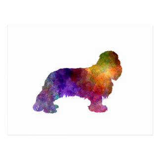 Cavalier King Charles Spaniel in watercolor Postcard