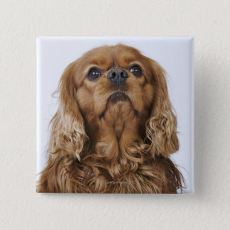 Cavalier King Charles Spaniel looking up 2 Inch Square Button