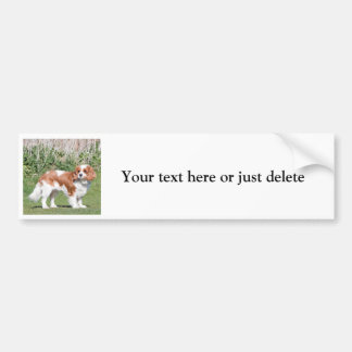 Cavalier King Charles Spaniel on board sticker