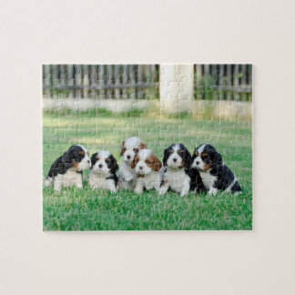 Cavalier King Charles Spaniel puppies Jigsaw Puzzle