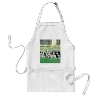 Cavalier King Charles Spaniel puppies Standard Apron
