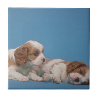 Cavalier King Charles Spaniel Puppies Tile