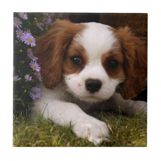 Cavalier King Charles Spaniel Puppy behind flowers Ceramic Tiles