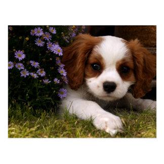 Cavalier King Charles Spaniel Puppy behind flowers Postcard