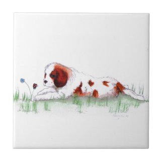Cavalier King Charles Spaniel  puppy CKC Ceramic Tiles