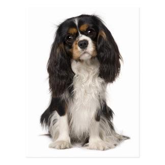 Cavalier King Charles Spaniel Puppy Dog Postcard