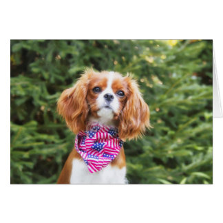 Cavalier King Charles Spaniel Puppy July 4th Card