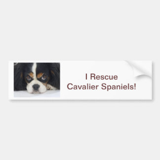 Cavalier King Charles Spaniel Rescue Bumper Stick Bumper Sticker