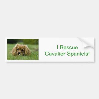 Cavalier King Charles Spaniel Ruby Bumper Sticker