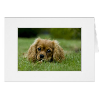 Cavalier King Charles Spaniel Ruby Card