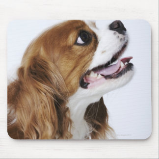 Cavalier King Charles Spaniel, side view Mouse Pad