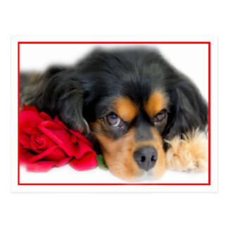 Cavalier King Charles Spaniel With A Rose Postcard
