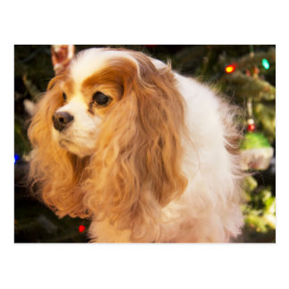 Cavalier King Charles Spaniel With Christmas Tree Postcard