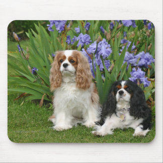 Cavalier King Charles Spaniels in Iris Garden Mouse Pad
