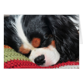 Cavalier King Charles Tri-Color Blank Note Card