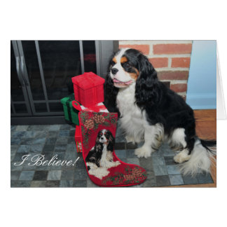 Cavalier King Charles Tri-Color Christmas Card