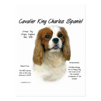 Cavalier Like No Other Breed Postcard
