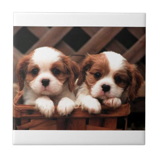Cavalier Puppies Ceramic Tile