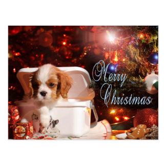 Cavalier puppy Christmas Card