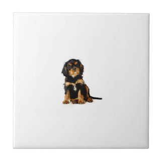 Cavalier Spaniel Black & Tan Tile