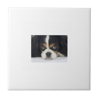 Cavalier Spaniel Tri-Colored Tile