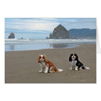 Cavaliers @ Cannon Beach, Oregon Card