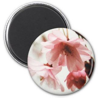 CB- Cherry Blossom Magnet
