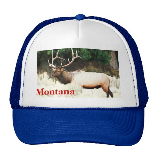 CCP -No 406,MF Montana's Trucker Summer Hat No # 4
