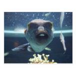 Ce poisson de Bucktooth Cartes Postales