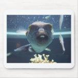 Ce poisson de Bucktooth Tapis De Souris
