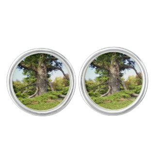 Cedar-of-Lebanon Tree Cufflinks