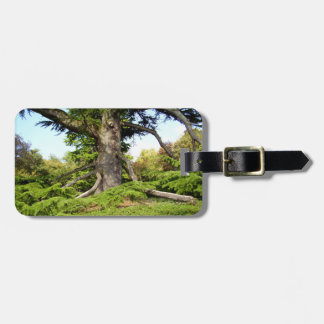 Cedar-of-Lebanon Tree Luggage Tag