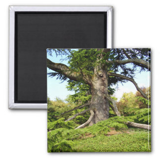 Cedar-of-Lebanon Tree Magnet