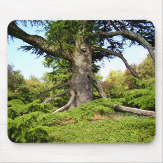 Cedar-of-Lebanon Tree Moue Mat Mouse Pad