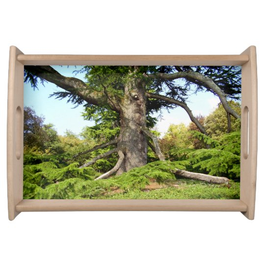 Cedar-of-Lebanon Tree Serving Tray